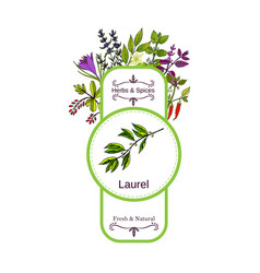 Vintage herbs and spices label collection laurel vector