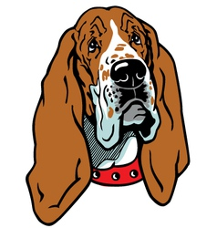 head of basset hound vector image