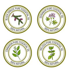 Set of essential oil labels black spruce geranium vector