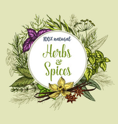 poster of spices and herbs seasonings vector image vector image