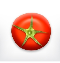 Tomato top view vector