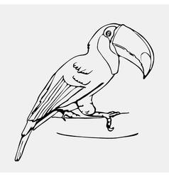 Hand-drawn pencil graphics toucan bird Engraving vector image