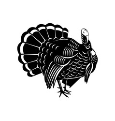 Wild turkey retro vector