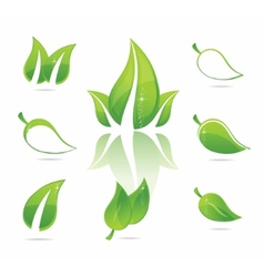 Green eco leaves vector