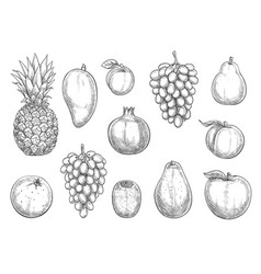 Icons of exotic and farm grown fruits vector