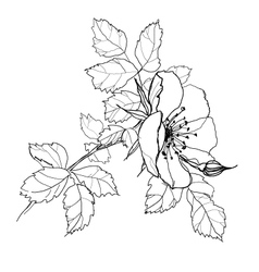 Rose flower pencil drawing vector