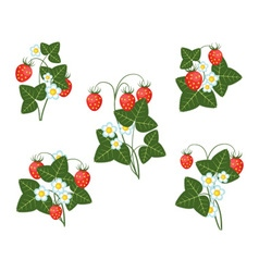Bushes of strawberries vector