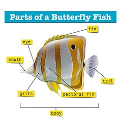 Diagram of different parts of fish vector