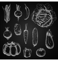 Autumn vegetables chalk sketches set vector