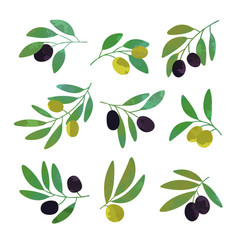 olive tree branches set of colorful vector image