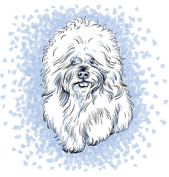 white cute dog bichon frise breed vector image vector image