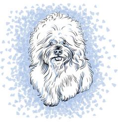 White cute dog bichon frise breed vector