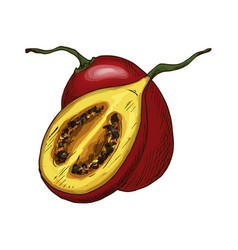 Tamarillo fruit sketch isolated icon vector