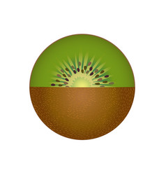 kiwi fruit isolated vector image vector image