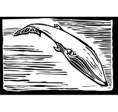 Sei Whale vector image