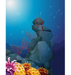 A view of the underworld with rocks and coral vector image vector image