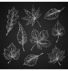 Chalk sketches of leaves silhouettes vector