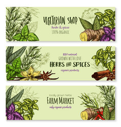 herb hot spice and food condiment sketch banner vector image
