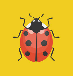Lady bug icon flat design vector