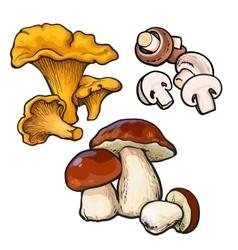 Set of chanterelle champignon porcini edible vector