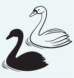 Swans on pond vector