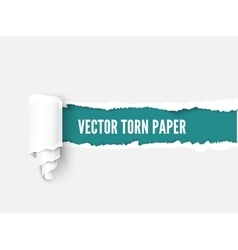 Torn paper with scroll and sample for text over vector image