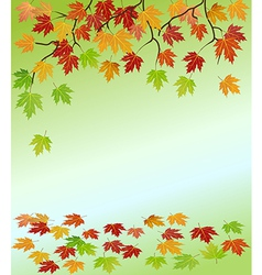 frame of the branches of a maple vector image