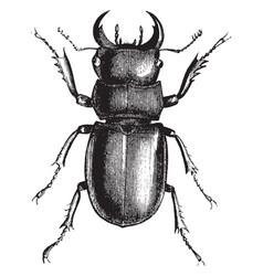 Longhorn beetle vintage vector