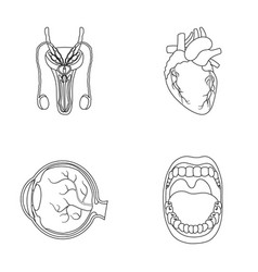 male system heart eyeball oral cavity organs vector image vector image