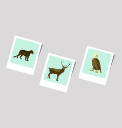 Polaroid photo of puma deer eagle vector
