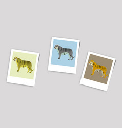Polaroid photo of tigers vector
