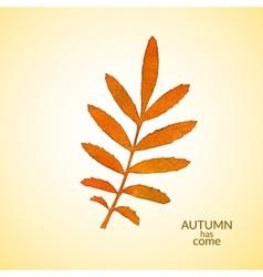 Autumn watercolor rowan leaf vector image vector image