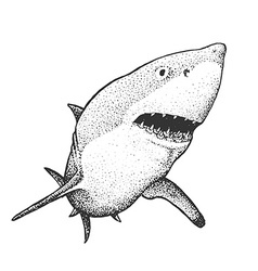 White shark engraving vector