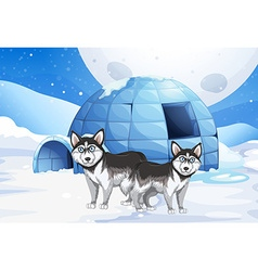 Syberian dogs and igloo vector image