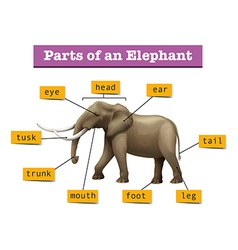 Different parts of wild elephant vector