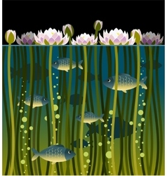 Water lilly and the fish vector