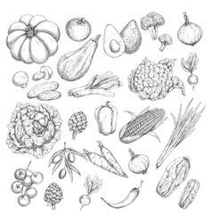 Sketch isolated vegetables or veggies icons vector