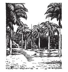 Botanic garden entrance vintage vector