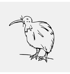 Hand-drawn pencil graphics kiwi bird engraving vector