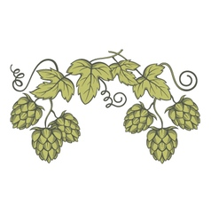 image of hops vector image