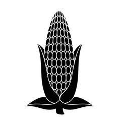 fresh corn cob icon vector image