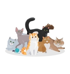 Cats breeds flat web banner vector