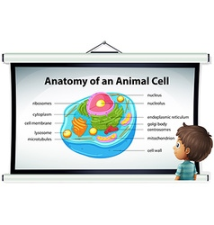 Chart showing anatomy of animal cell vector