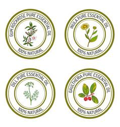 Set of essential oil labels gum rockrose inula vector