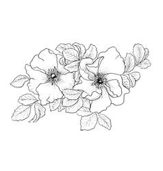 Briar Wild rose vector image