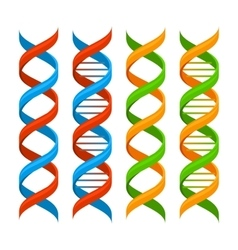 Dna genome molecules set vector