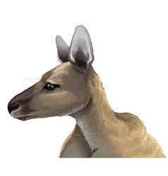 Eastern grey kangaroo - Macropus giganteus vector image vector image