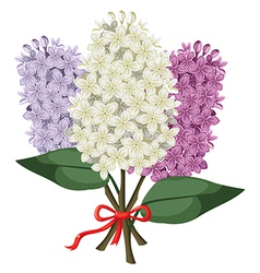 Lilac bouquet vector