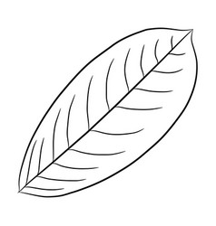 leaf of plant from the contour black brush lines vector image