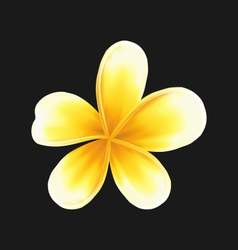 Frangipani flower plumeria isolated on dark vector